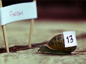Snail Racing EUO Tim Norris Flickr